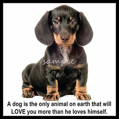 Adorable Black Dachshund Puppy Dog Refrigerator Magnet 3.50 x 4.25