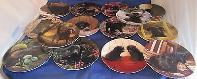 Job lot of Wedgwood Playful Puppies Plate by John Silver