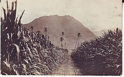 Philippines - Sugar Cane Field old real photo sepia postcard