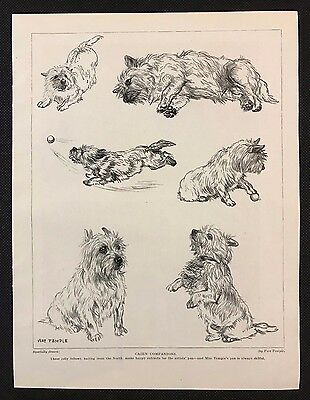 Original 1934 Dog Print / Bookplate - CAIRN TERRIERS, Sketches by Vere Temple