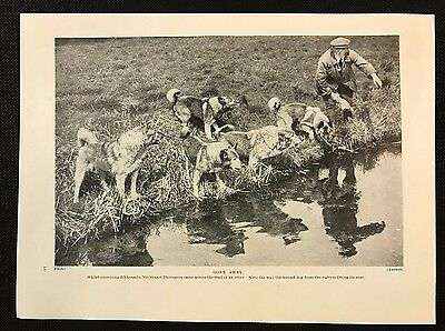 Original 1934 Dog Print / Bookplate - ELKHOUNDS, On the trail of an Otter