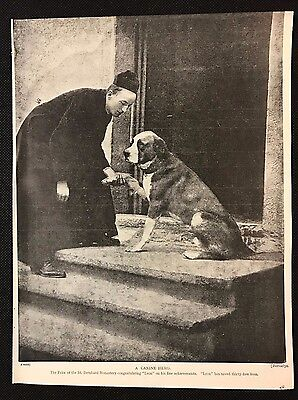 "1934 Dog Print / Bookplate - ST. BERNARD, Prior with ""Leon"" who saved 35 lives"