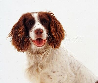 ENGLISH SPRINGER SPANIEL Garden FLAG Dog BREED Puppy Outdoors Hunting Cat Tails