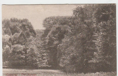 Vintage Frith's Postcard The Zigzags Selborne Hampshire Posted 1904.