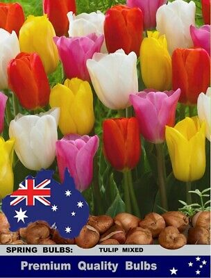 TULIPS  BULBS*  Most Popular TULIPS Mixture Colours: 6x 10x 25x BULBS