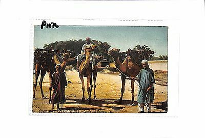 Egypt ETHNIC Camels and Drivers Egyptian Types and Scenes Postcard