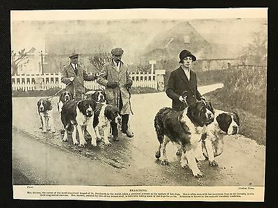 Original 1934 Dog Print / Bookplate - ST. BERNARD, Mrs Staines exercising dogs