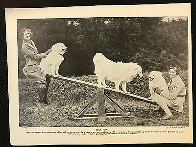 Original 1934 Dog Print / Bookplate - SAMOYEDS, 2 Ladies & 3 Dogs on a Seesaw