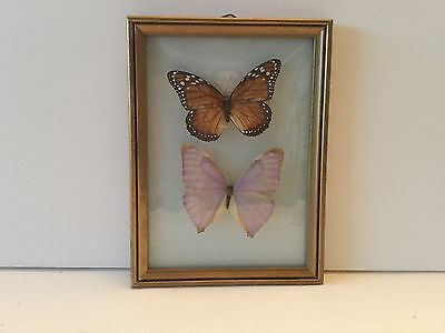 Vintage Framed Real Beautiful Butterfly Display