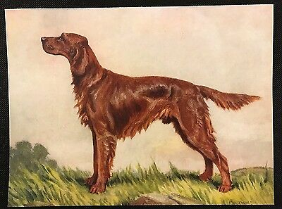 1934 Colour Dog Print / Bookplate - IRISH SETTER, Painted by F.T. Daws