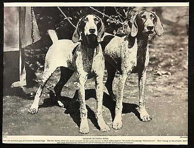 1934 Dog Print / Bookplate - GERMAN SHORT HAIRED POINTER, Two Hunting Dogs