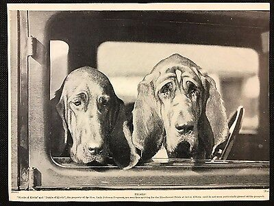 Original 1934 Dog Print / Bookplate - BLOODHOUNDS, Kirtle Dogs arrive at Trials