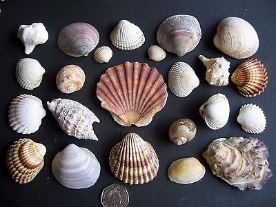 A Beautiful Collection Of Shells.