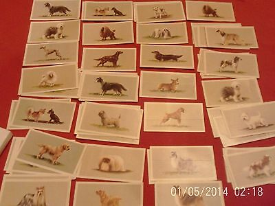 grandee top dogs collection this is a part set 19 of 25 card set