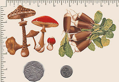2 x Waterslide ceramic decals Fungi.  Vegetables  Kitchen decor. PD701