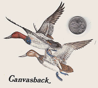 Waterslide ceramic decal Canvasback Diving Ducks Birds 1986 decal #39