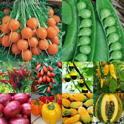 3-3000Pcs Wholesale Vegetables Seed Vegetable Garden Courtyard Decor Seed SE