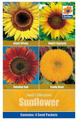 SEED Collection Pack - SUNFLOWERS, Giant, Dwarf, Evening Sun, Teddy Bear