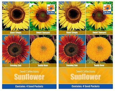2 PACKS of SEED Collections - SUNFLOWER, Giant, Evening Sun, Dwarf, Teddy Bear