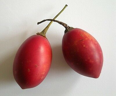 Red Tamarillo – Tree Tomato (solanum betaceum) 8 Reliable Viable Seeds