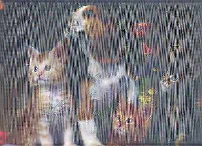 Holographic Lenticular 3D Image Beagle And Kitten Poster Print 3Dimensional