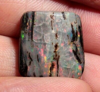 Precious Stable Opal Wood from Virgin Valley Nevada - 8.3 ct - opalized
