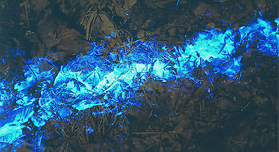 Luminol same I sell to the FBI 1 USE INCLUDES OXIDIZER bluestar forensic