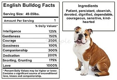 ENGLISH BULLDOG Facts LARGE FRIDGE MAGNET