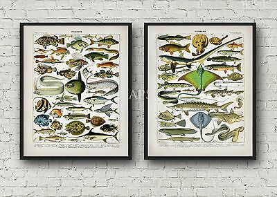 Saltwater Fish 2 Poster Set Sharks Dolphin Seahorse Late 1800s 8x10 Repro