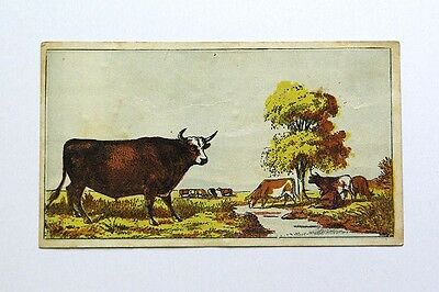 Victorian Trade Card Boston Beef Packing Co.