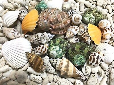 SHELLS MIX and CORAL SAND 500g for craft, wedding,home, aquarium decoration.