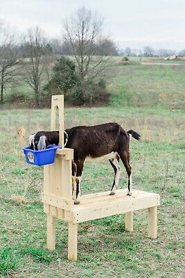 """Goatstand.com Small Pygmy Goat Stand 23"""" x 36"""" Treated Wood + Durable Stanchion"""
