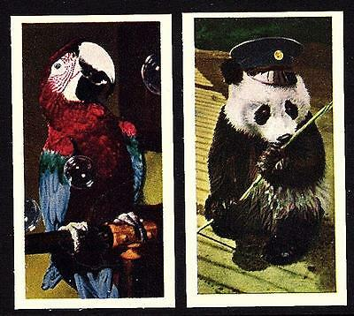 National Pets Club 25 Card Set Series 1 Kane Products 1958. Birds, Dogs and More