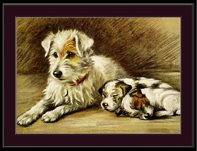 English Picture Print Fox Terrier Puppy Dog Art