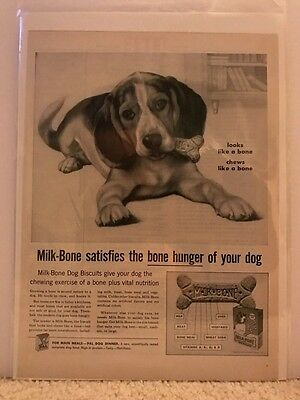 1959 VINTAGE 10X13 PRINT Ad MILK-BONE DOG BISCUITS BEAGLE ART FULL PAGE AD