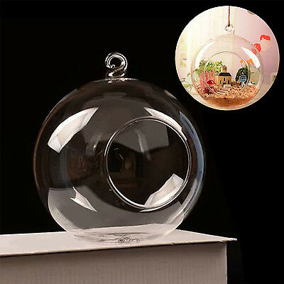 Fashion Hanging Glass Ball Vase Planter Pot Terrarium Container Garden Decor New