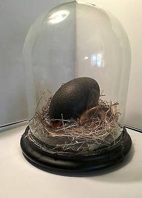Antique Bell Jar Cloche Display Dome with Bird's Nest and Emu Egg