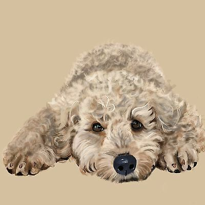 "Print - Labradoodle Youngster 12""x12'"