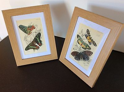 """2 X Beautiful Framed Antique Butterfly Prints 1896 Lithograph Kirby 10X8"""""""