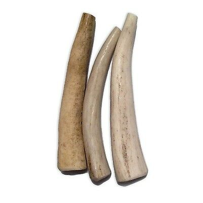 TroopPetProducts Naturally Shed Canadian Antler Extra Small 3 to 3.5-Inch... New