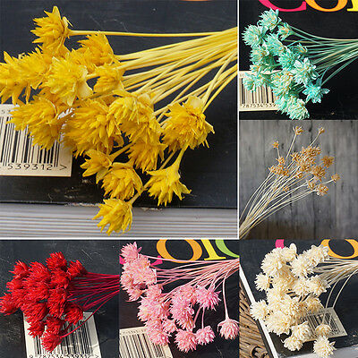 30 Pcs Dried Flowers Bridal Wedding Flower Arrange Garden Home Decor Craft Gift