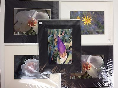 Matted Photos Lot (5) Floral Wayne Dodgens Designs 10x8 Signed