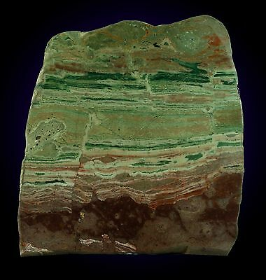 9.90 Ins Multi Colours Jasper  Slab/fossil   Vicinity Of Mable Bar Australia