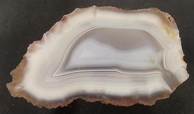 NA   Fast Parallax!!!  Moroccan WHITE BANDED AGATE Faced Rough - 12.65 ozs