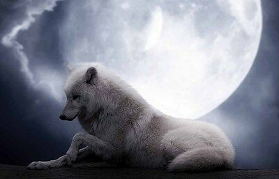 Home Art Wall Decor Artistic Wolf Wolves Oil Painting HD Printed On Canvas III