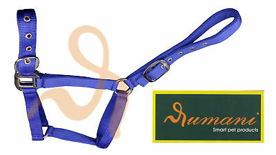 Rumani Polypropylene / PP Horse Halter / Headstall With Solid Iron Hardware