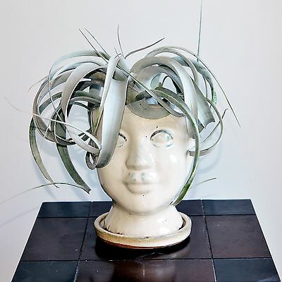 Air Plant Xerographica Queen Tillandsia sits on Ceramic Head Planter Gift