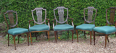 Set Of 5 Edwardian Shield Back Dining Chairs - 2 Carvers, 3 Standard - Somerset