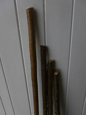 hazel walking stick shanks