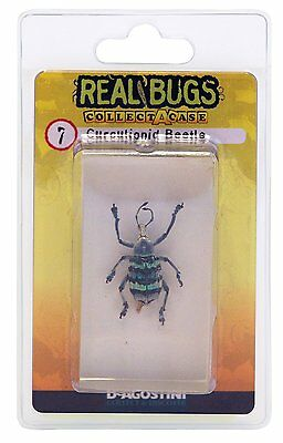 DeAgostini Real CURCULIONID BEETLE Paperweight Science Insect Bugs Resin Lucite